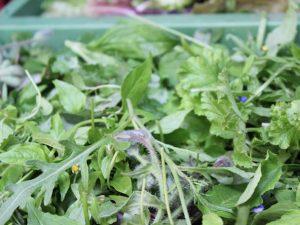 Wilder Salat für Überraschungen und Abwechslungen