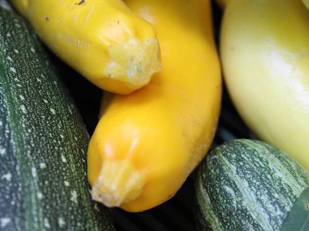 Bunte Zucchini